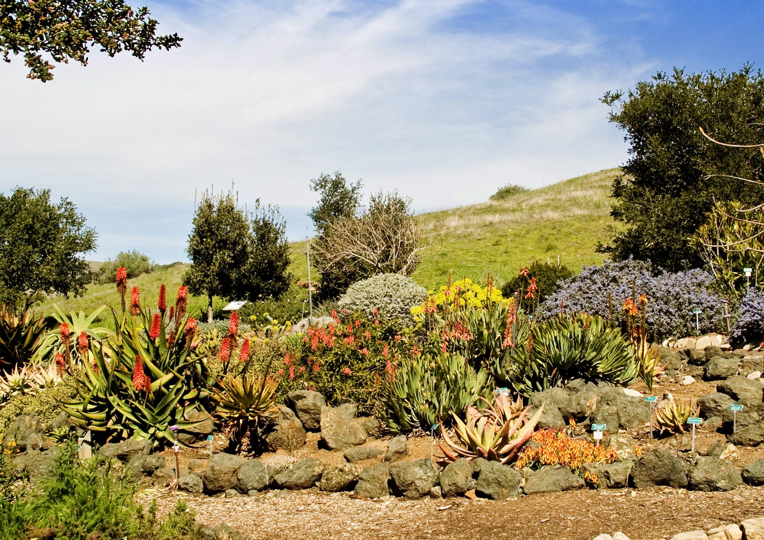 3 Aloe Garden.jpg