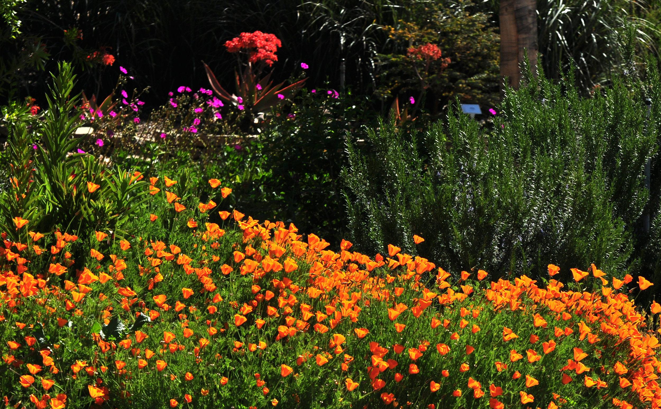 8 Native Wildflowers.jpg