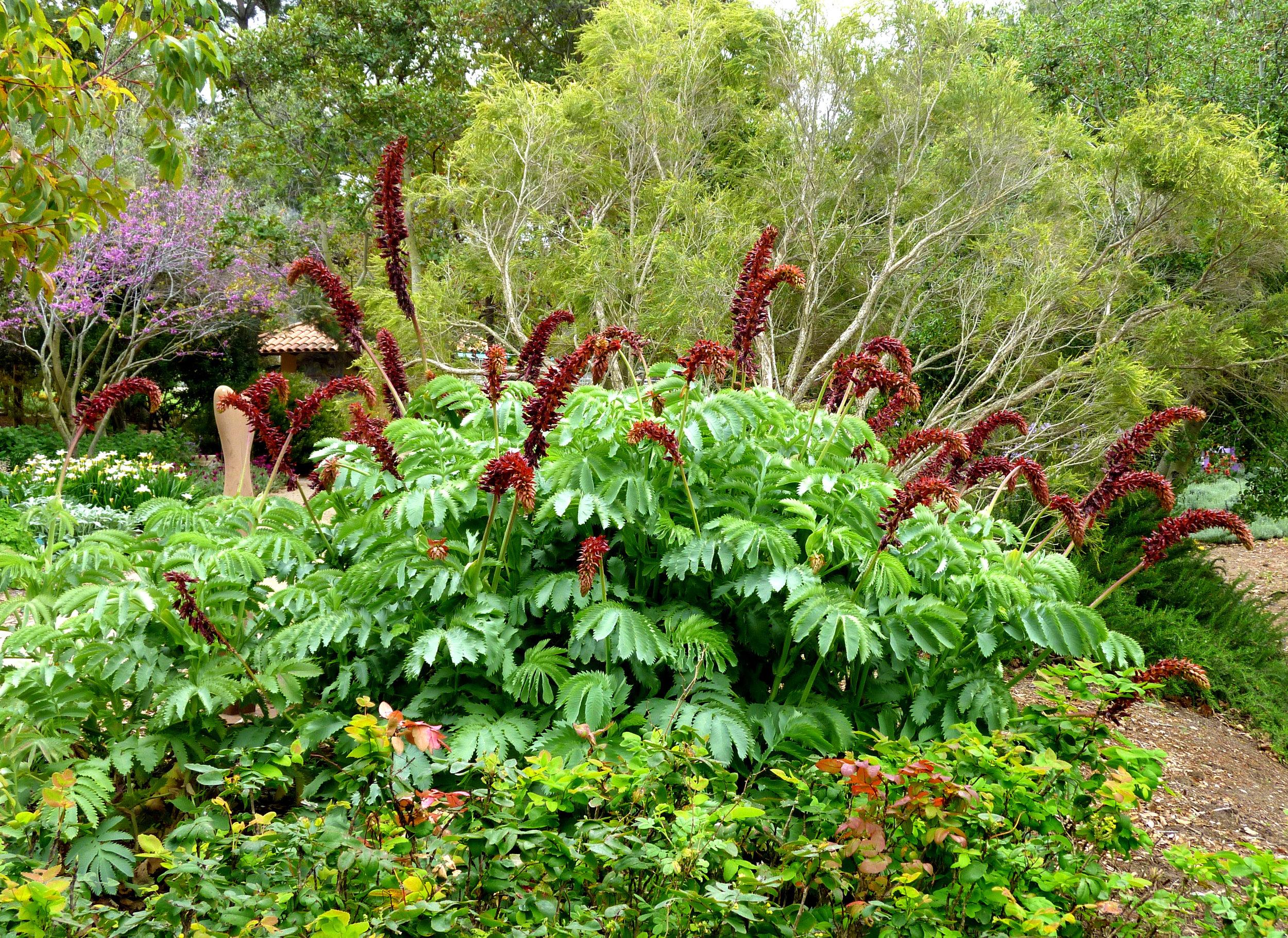 12 South African Flora.jpg