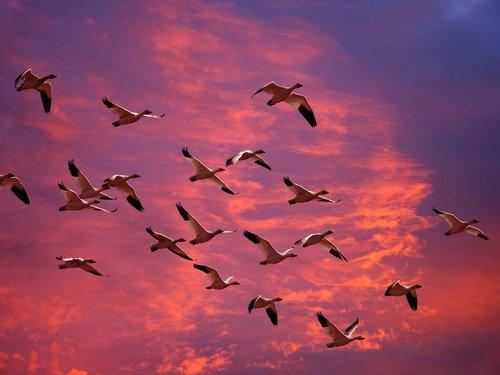 Mar- bird migration.jpg