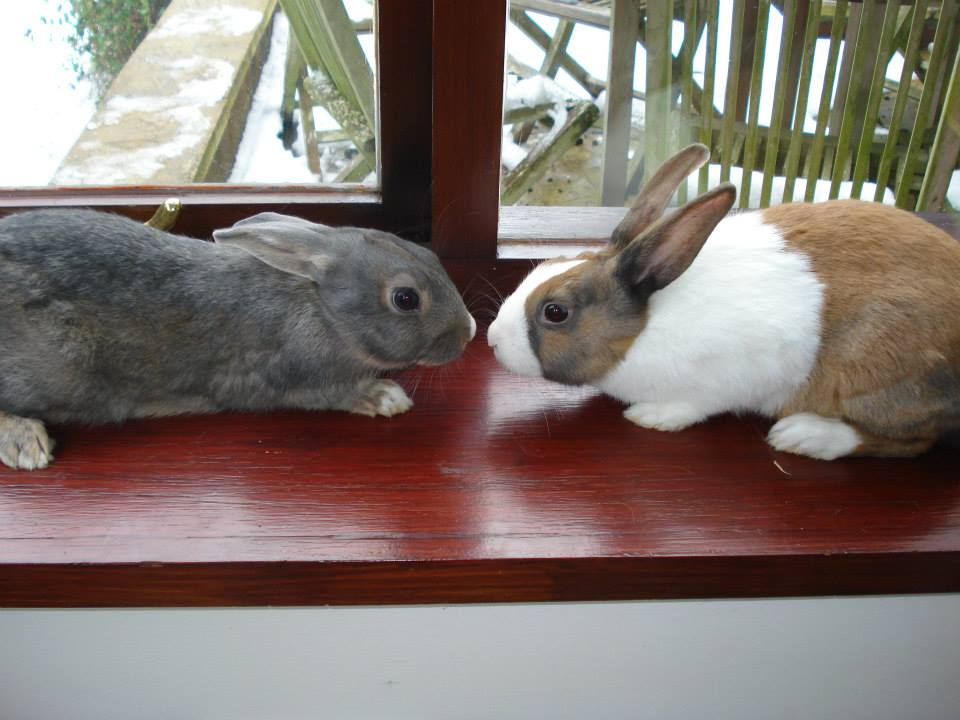 Enjoy a photo of Rose and Cinnamon, sadly missed x