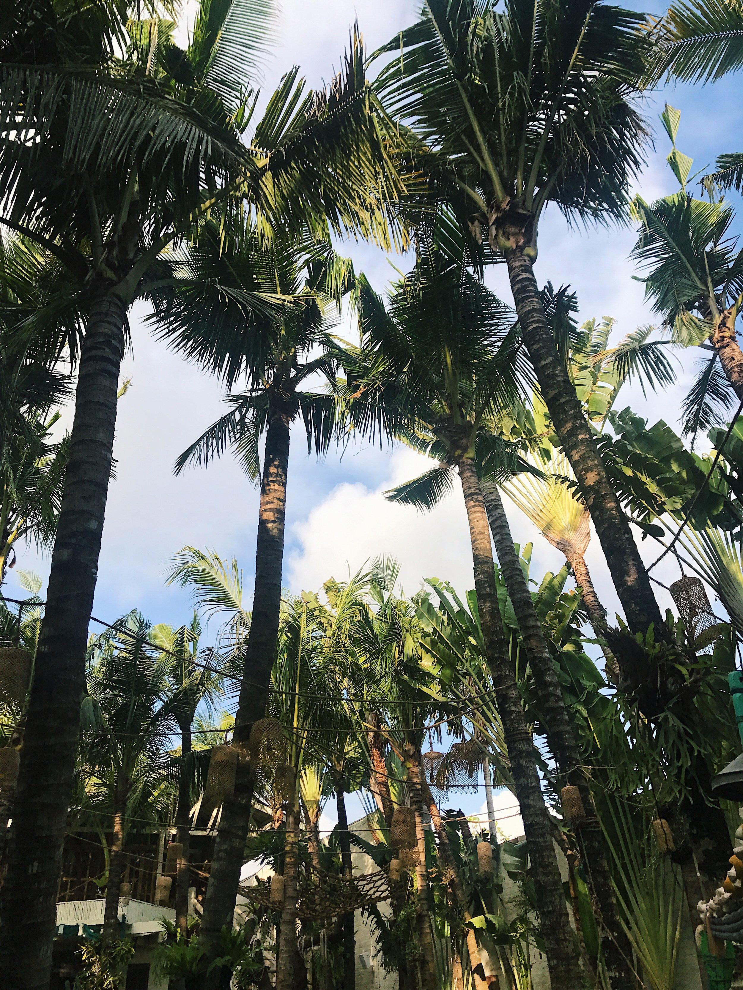 Palm trees at La Brisa Canggu Bali