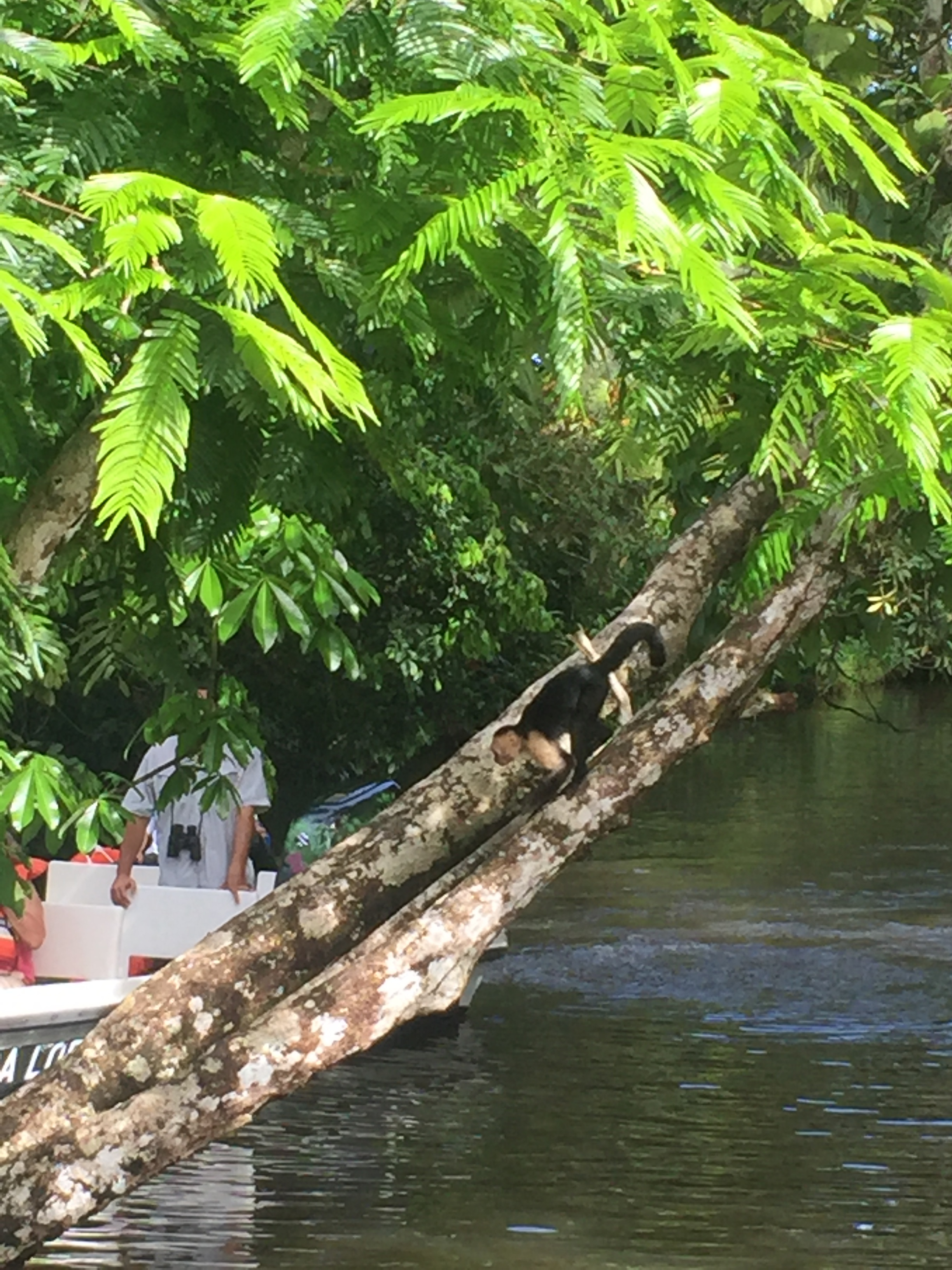 Monkeys in Costa Rica   Helena Alyssa