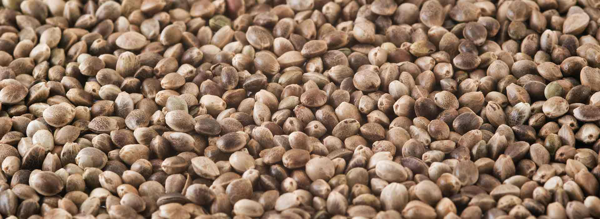 bigstock-Hemp-Seeds-2848439.jpg