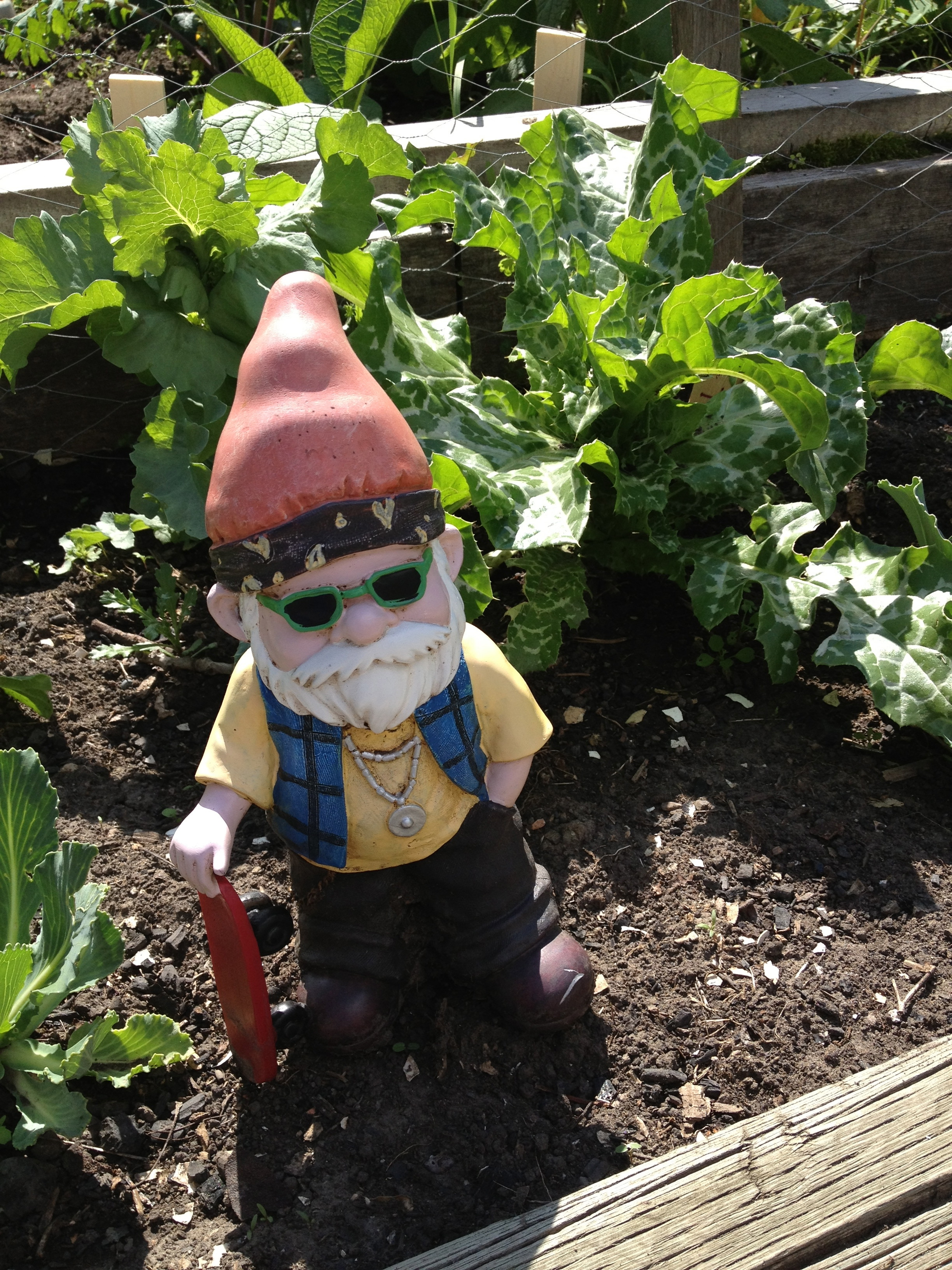 A happy gnome amongst his veg and milk thistles