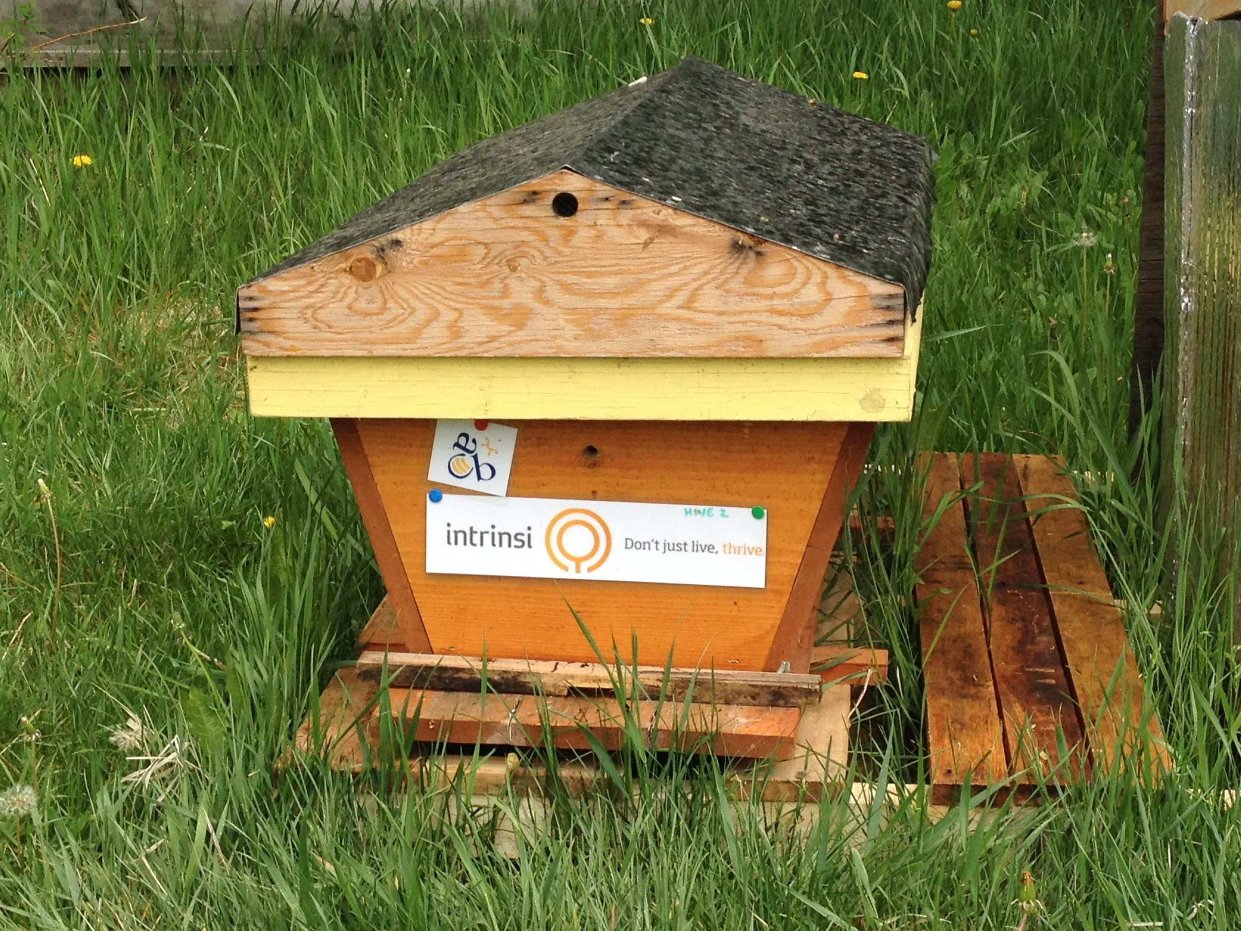 The beehive in a better location than my back deck (see pic above on how the bees got into my neighbours hot tub!)
