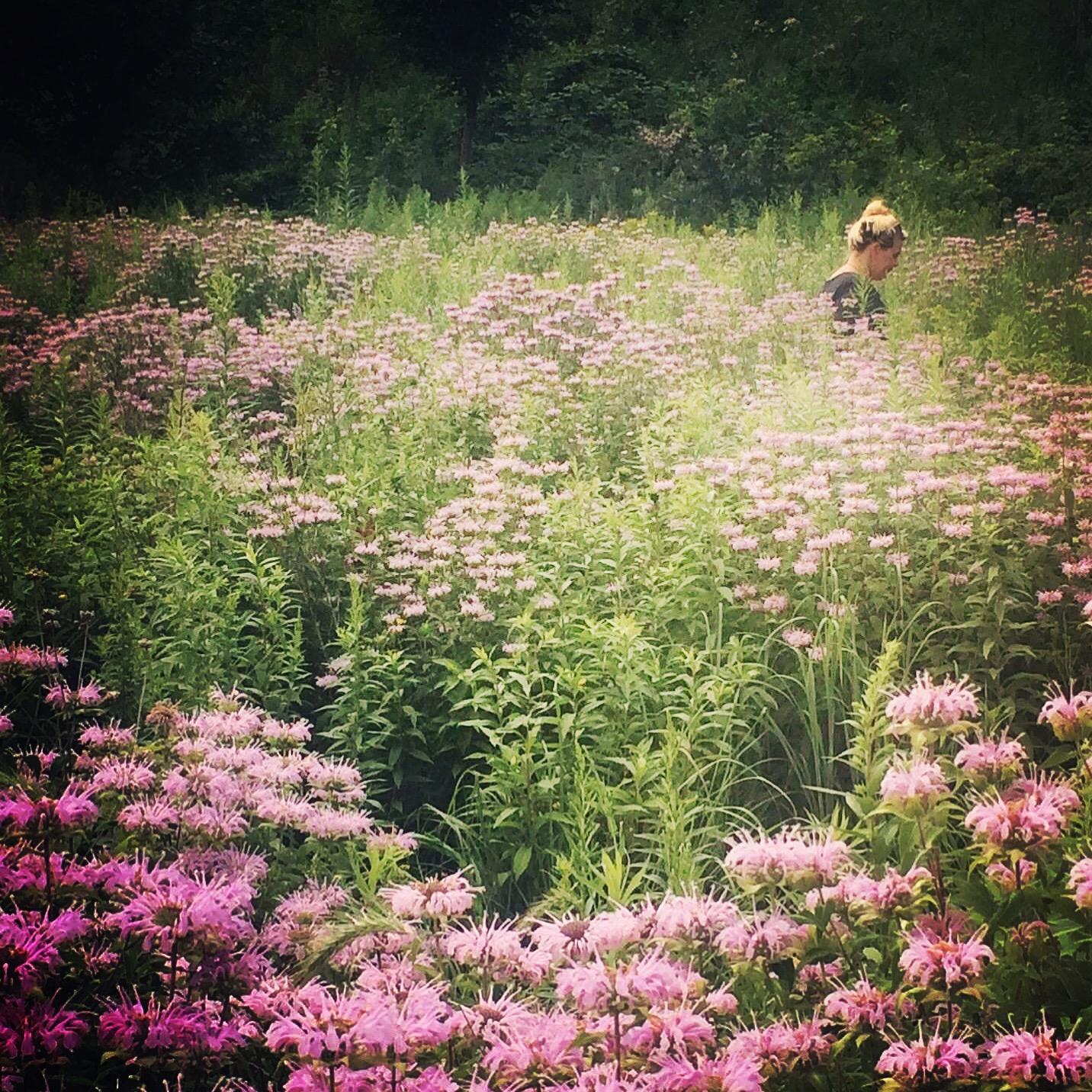 Lydia Rose in a field of Monarda...