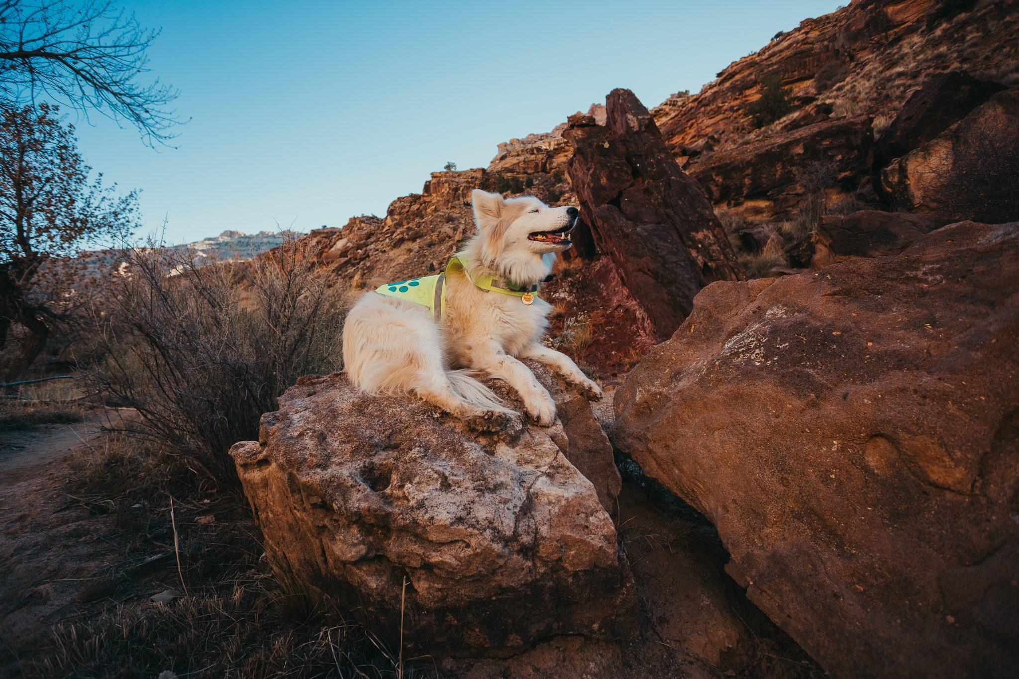 Stella taking a break after hiking… 20 ft