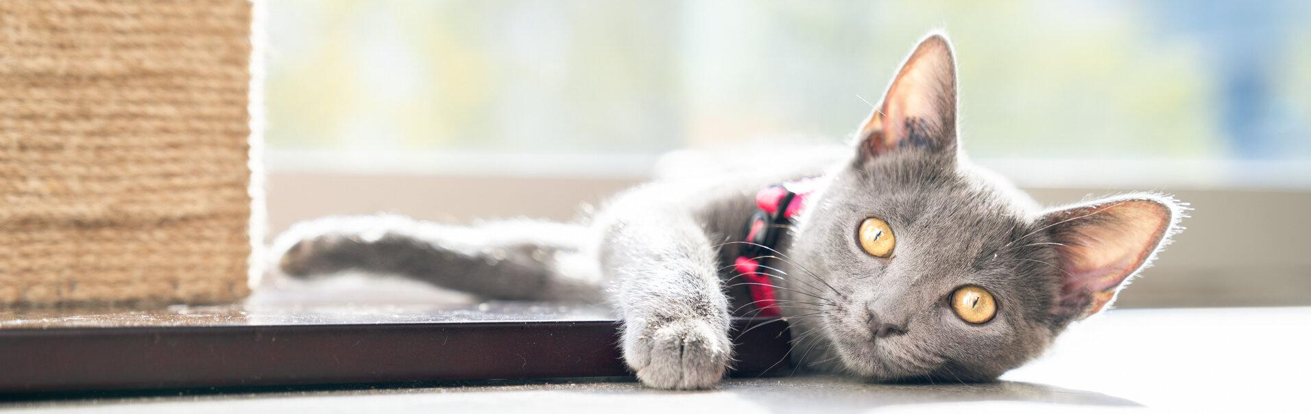 banner cat catfe.jpg
