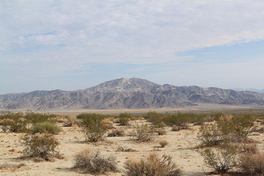 desert-joshuatree.JPG