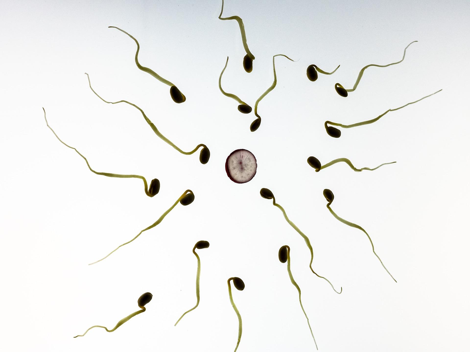 sperm-956480_1920.jpg