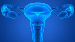 Bacteria in the fallopian tubes  Image: Medical News Today