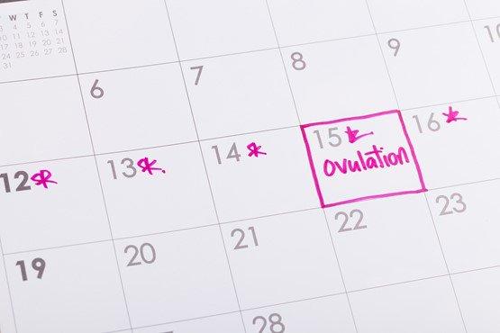 ovulation calender.jpg