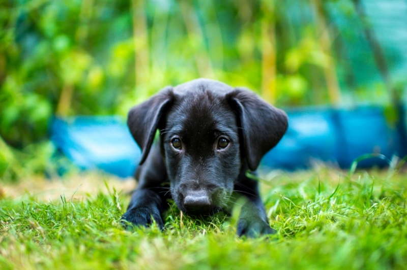 7 tips for photographing black dogs -