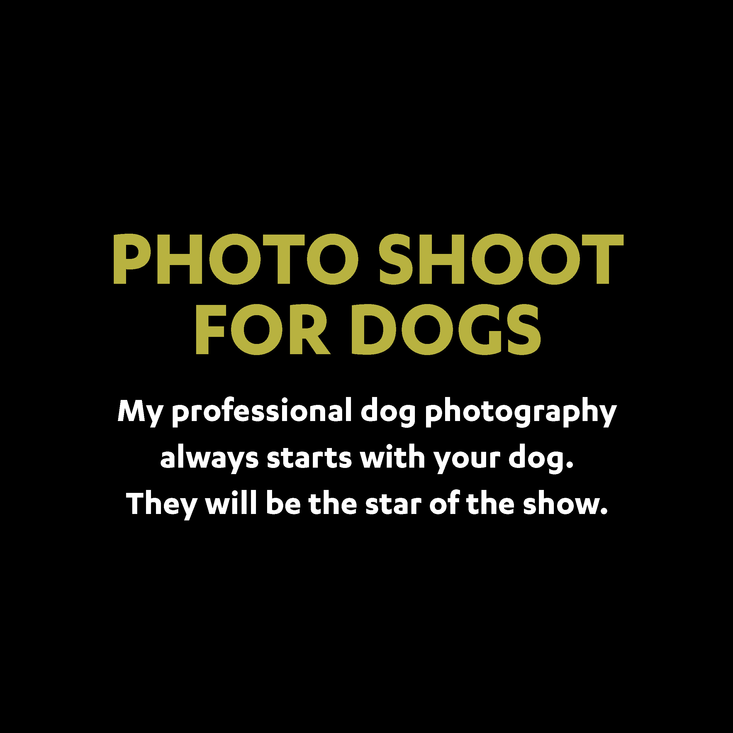 photo shoots for dogs.jpg