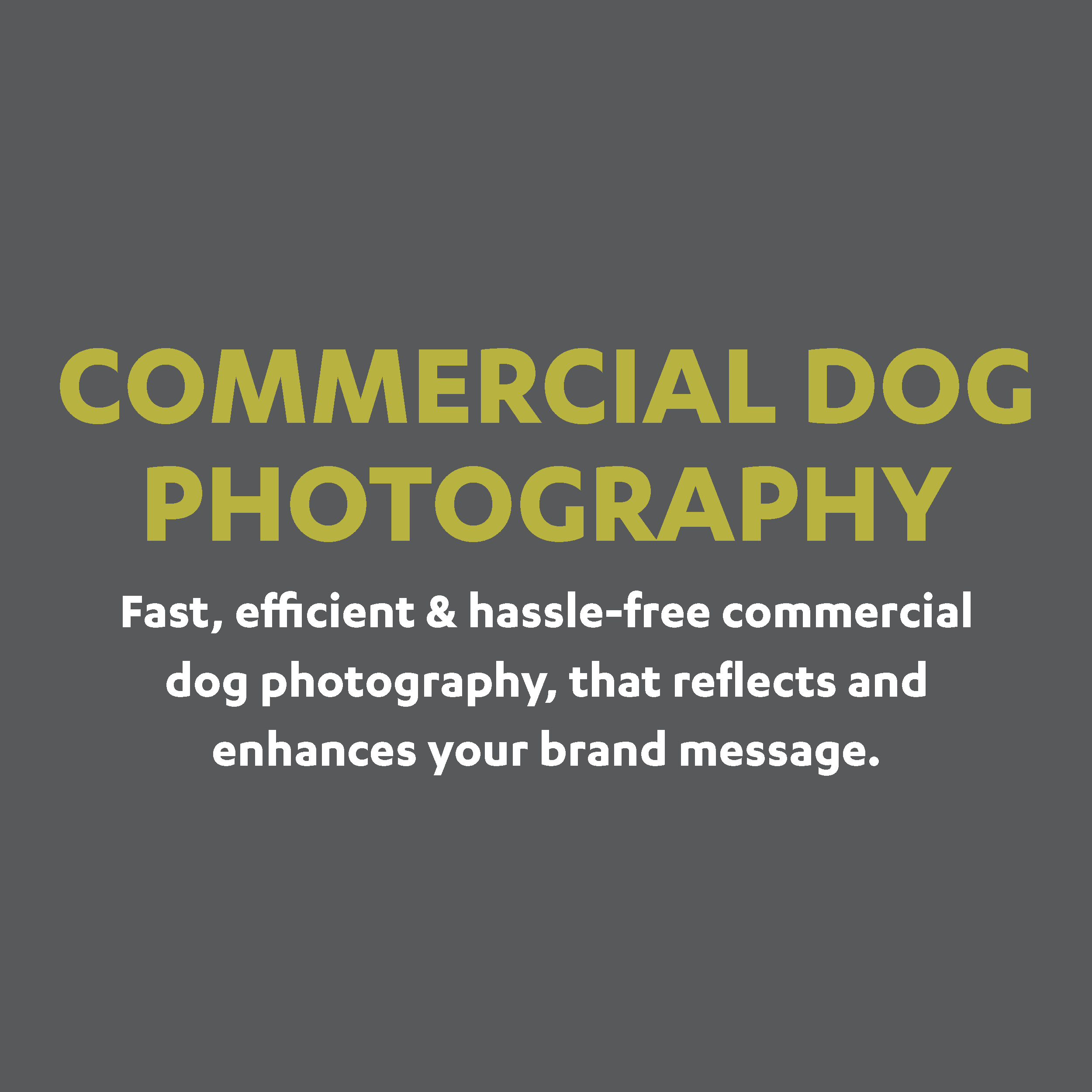 Commercial dog photography and stock images