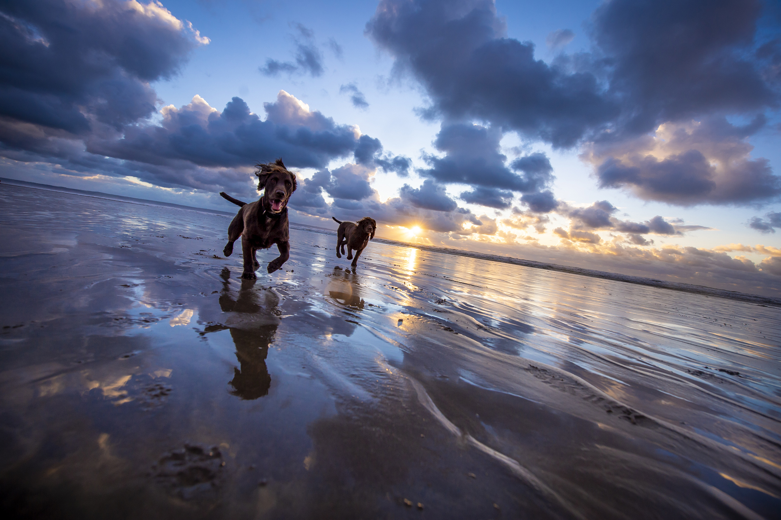 dogs-at-saunton-sands-2.jpg