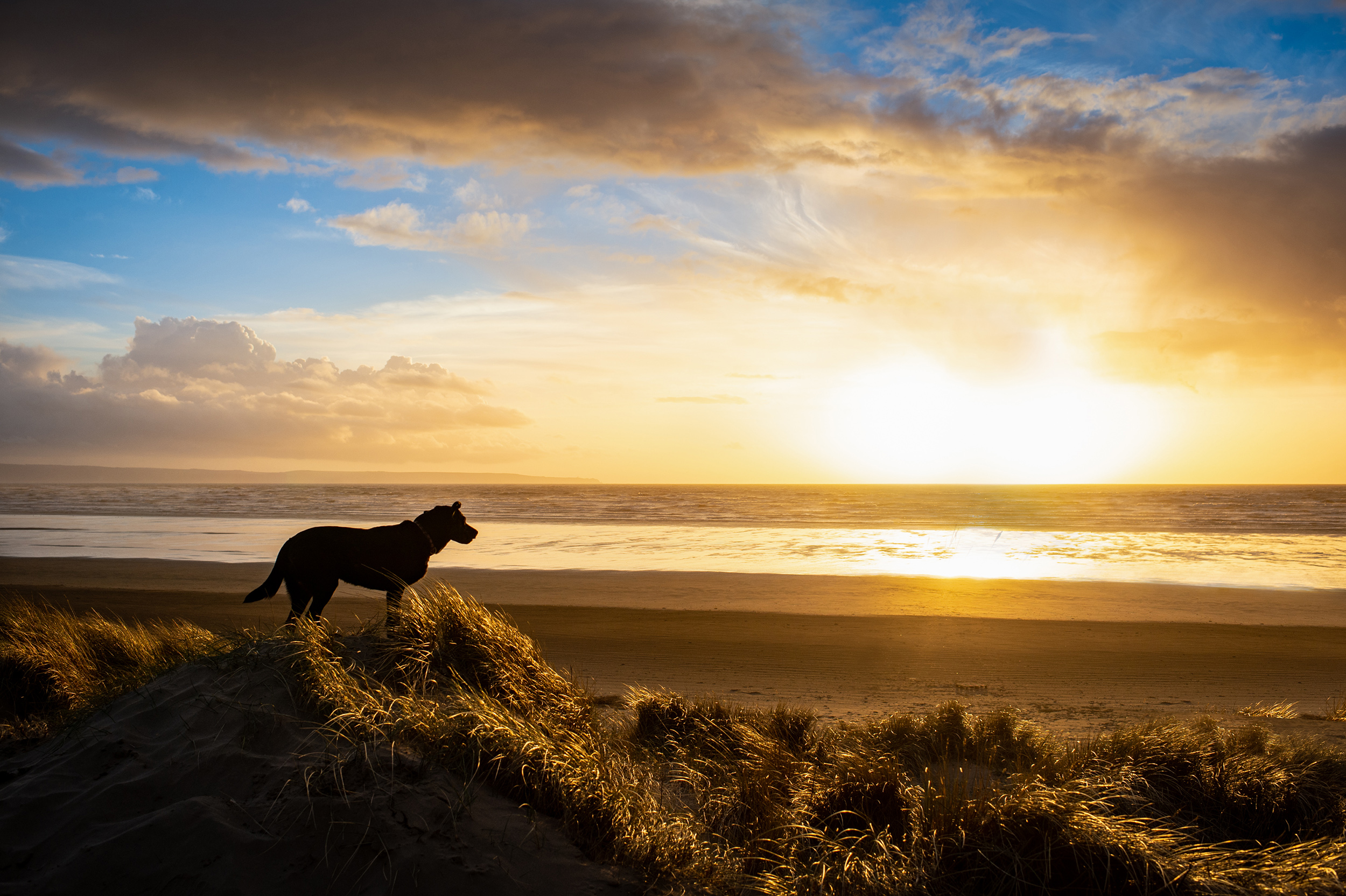 dogs-at-saunton-sands-1.jpg