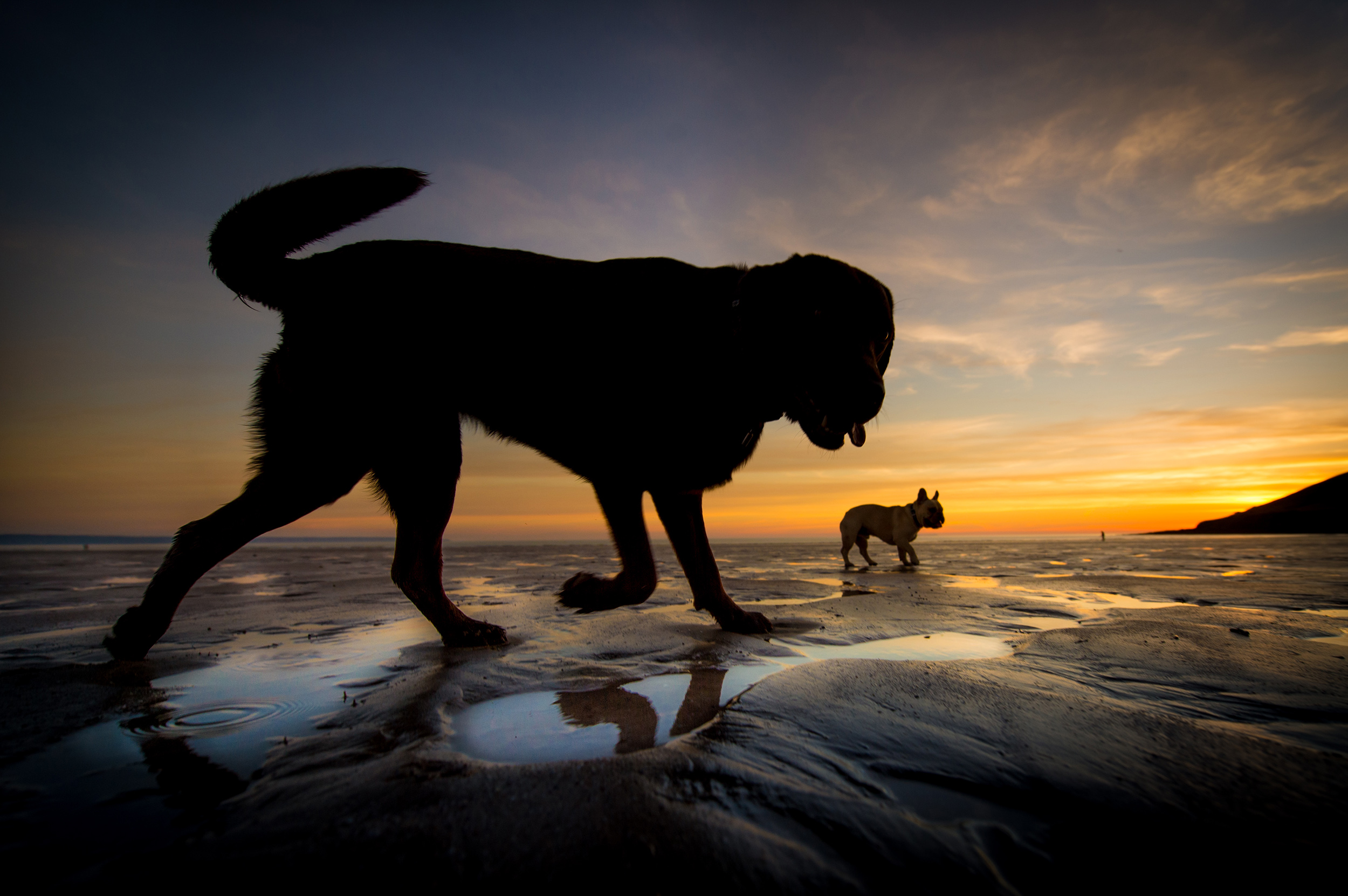 dogs-at-saunton-sands-6.jpg
