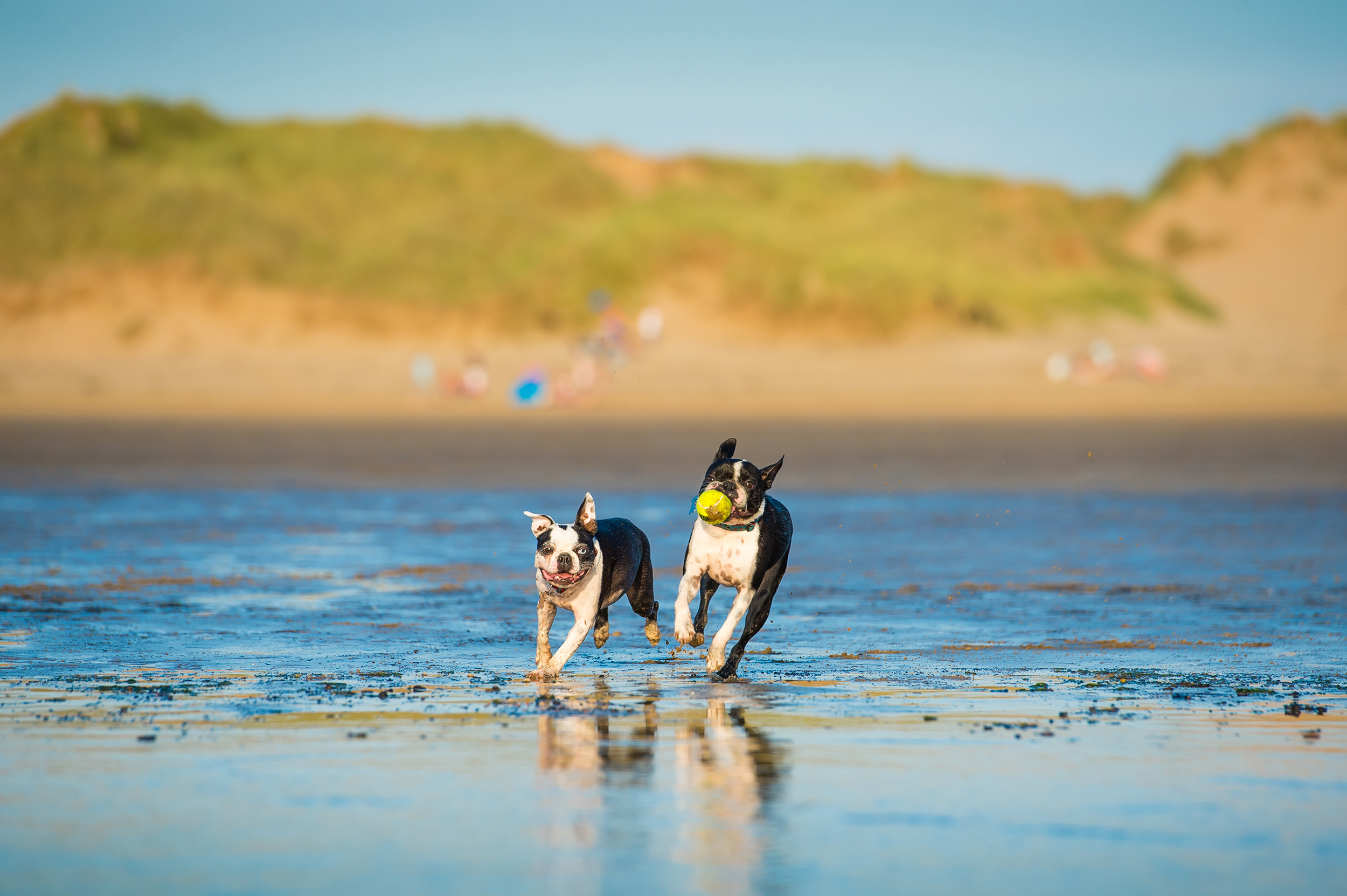dogs-at-saunton-sands-7.jpg