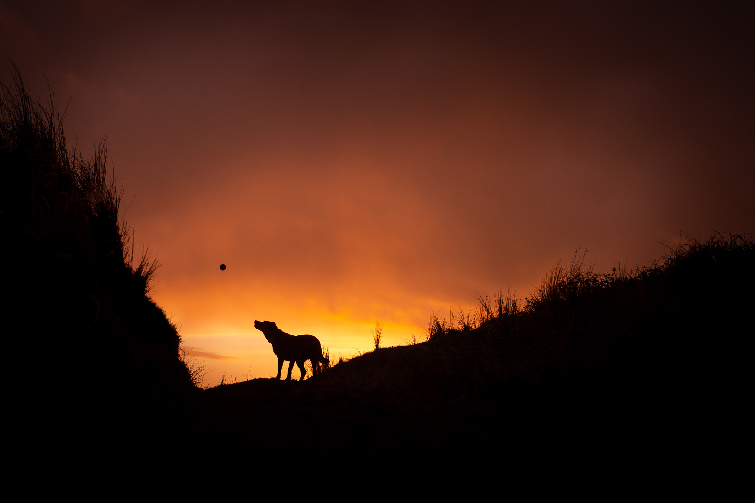 dogs-at-saunton-sands-8.jpg