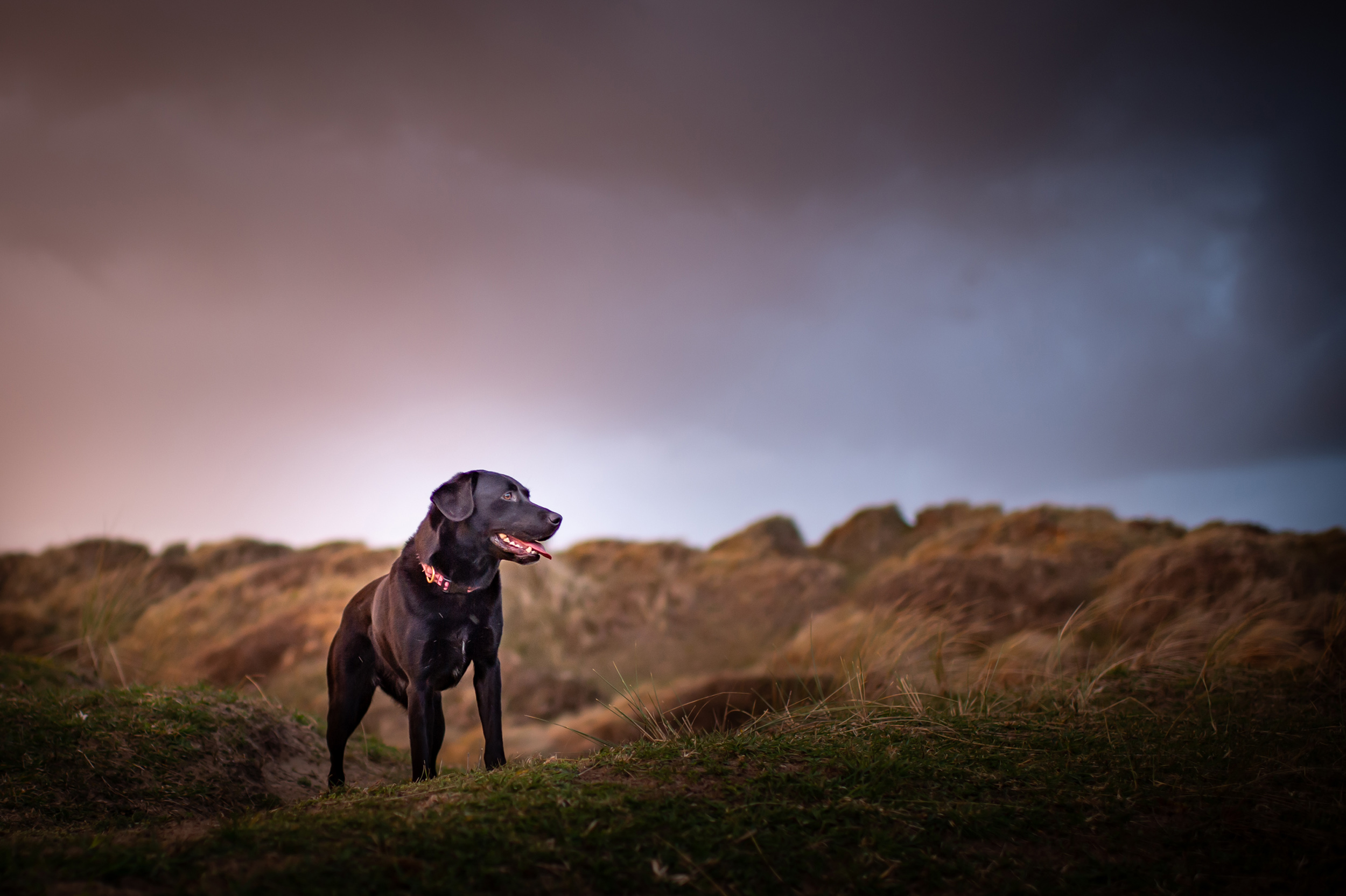 dogs-at-saunton-sands-9.jpg