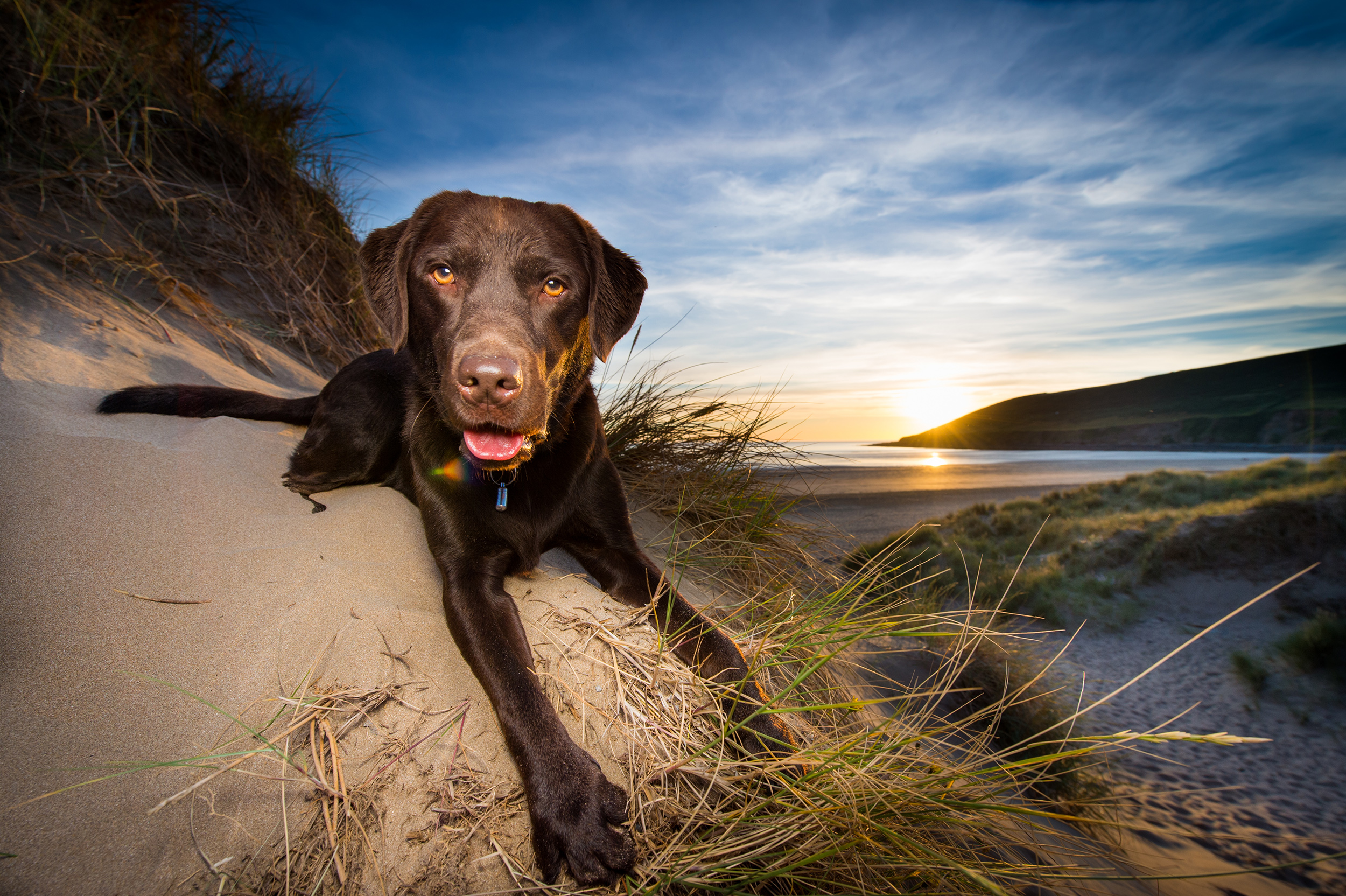 dogs-at-saunton-sands-10.jpg