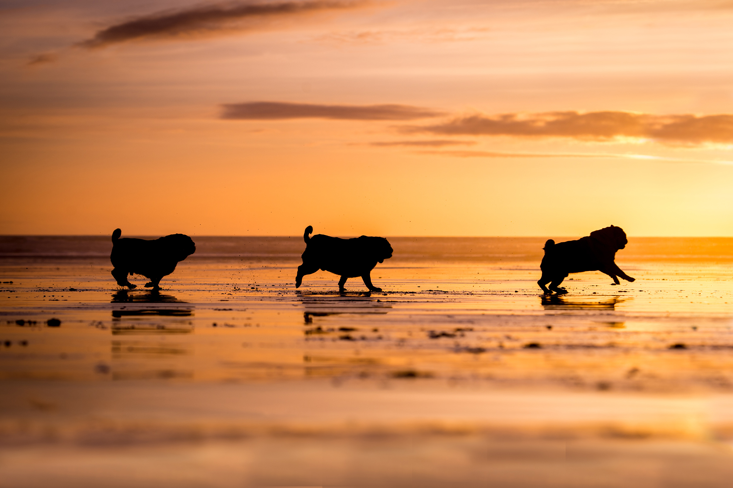 dogs-at-saunton-sands-13.jpg