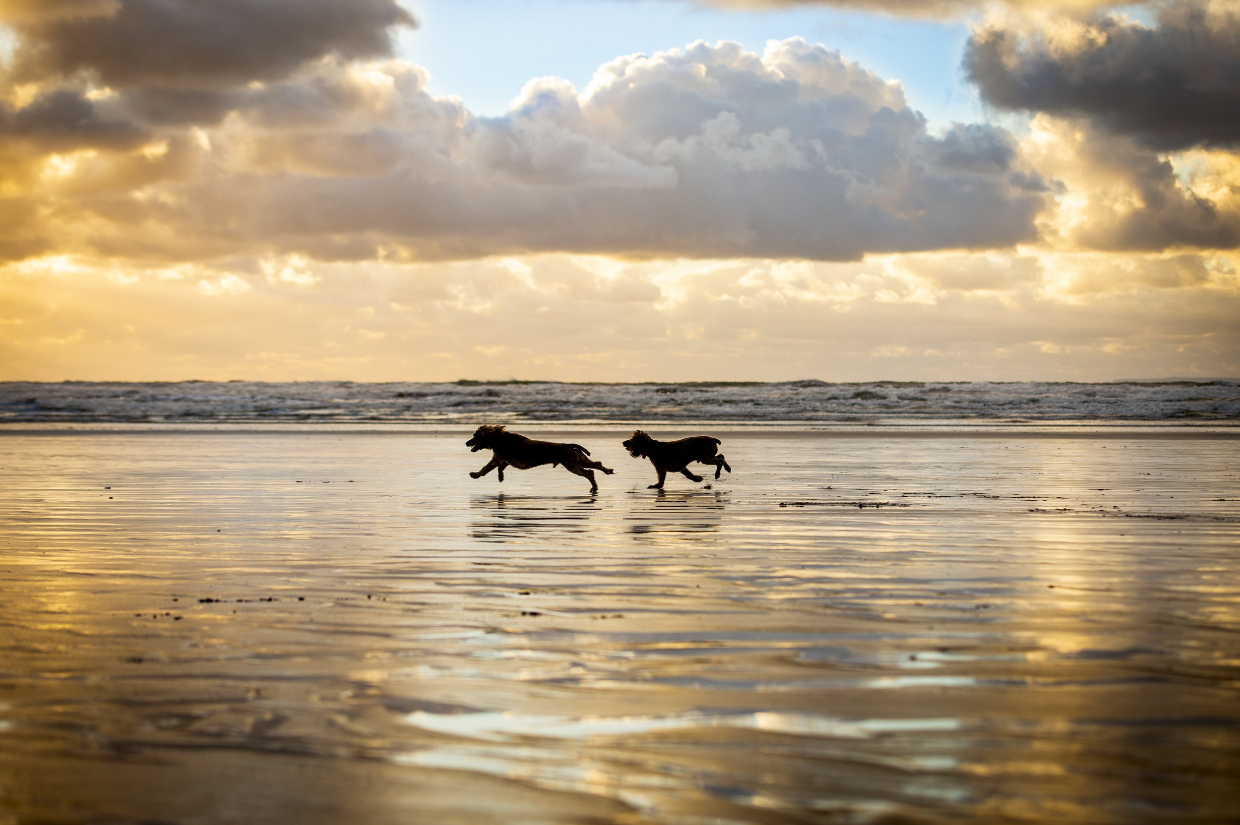 Dogs at Saunton Sands