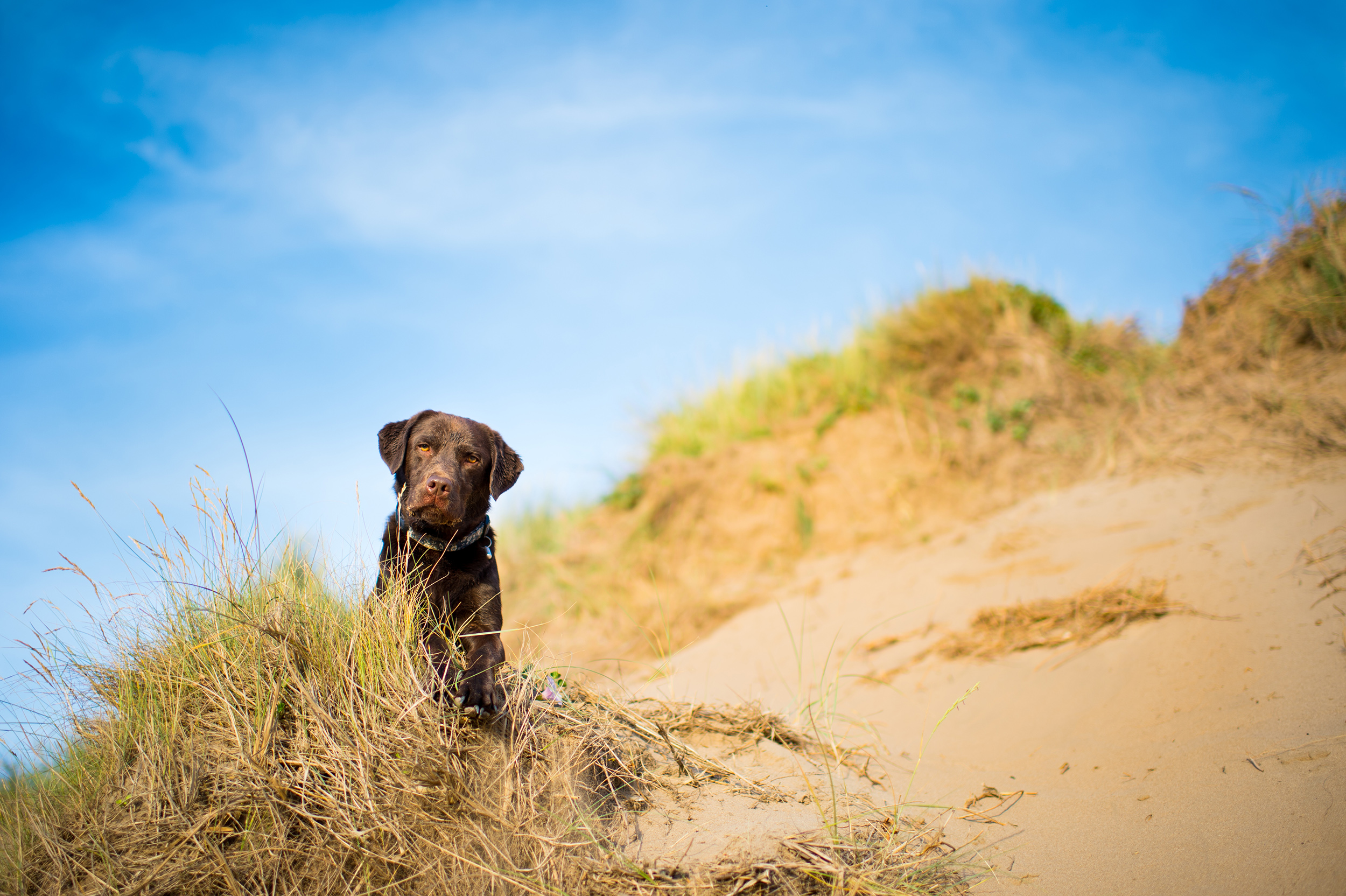 dogs-at-saunton-sands-14.jpg