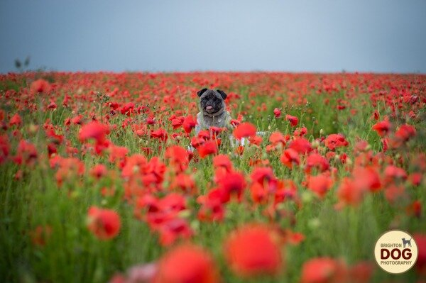 Boo-and-Poppies-1.jpg