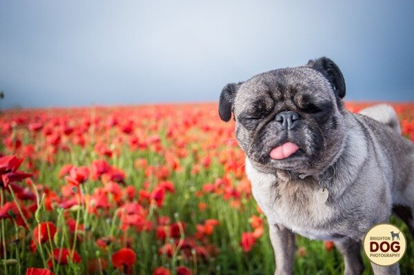 Boo-and-Poppies-3.jpg