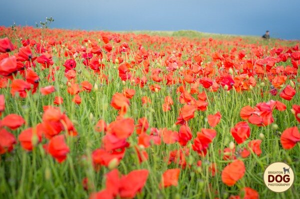 Boo-and-Poppies-8.jpg
