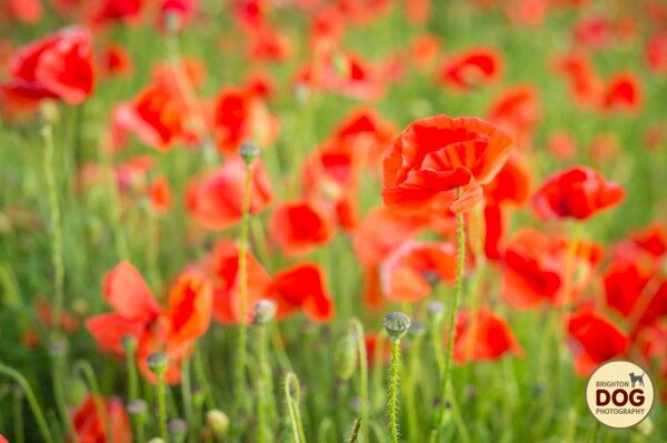 Boo-and-Poppies-9.jpg