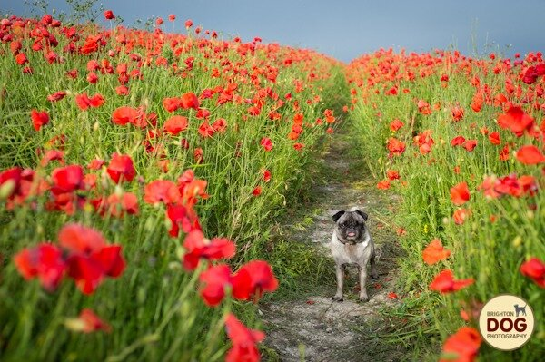 Boo-and-Poppies-10.jpg