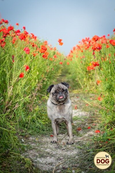 Boo-and-Poppies-11.jpg