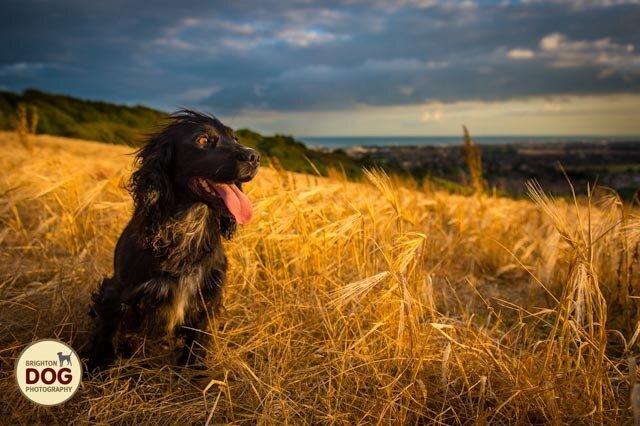 3-golden-hour-dog.jpg