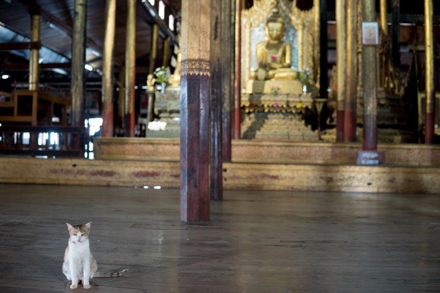 cat-monastery.jpg