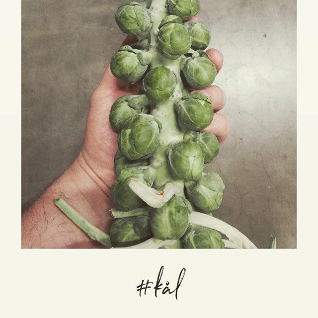Kål på rækker 👌🏻✨ De første nye rosenkål er kommer hjem 〰️ i vores øjne den mest delikate kål-type..... . . . #skammeritzoggraem #sæsonensråvarer #privatedining #catering #aarhus #kål