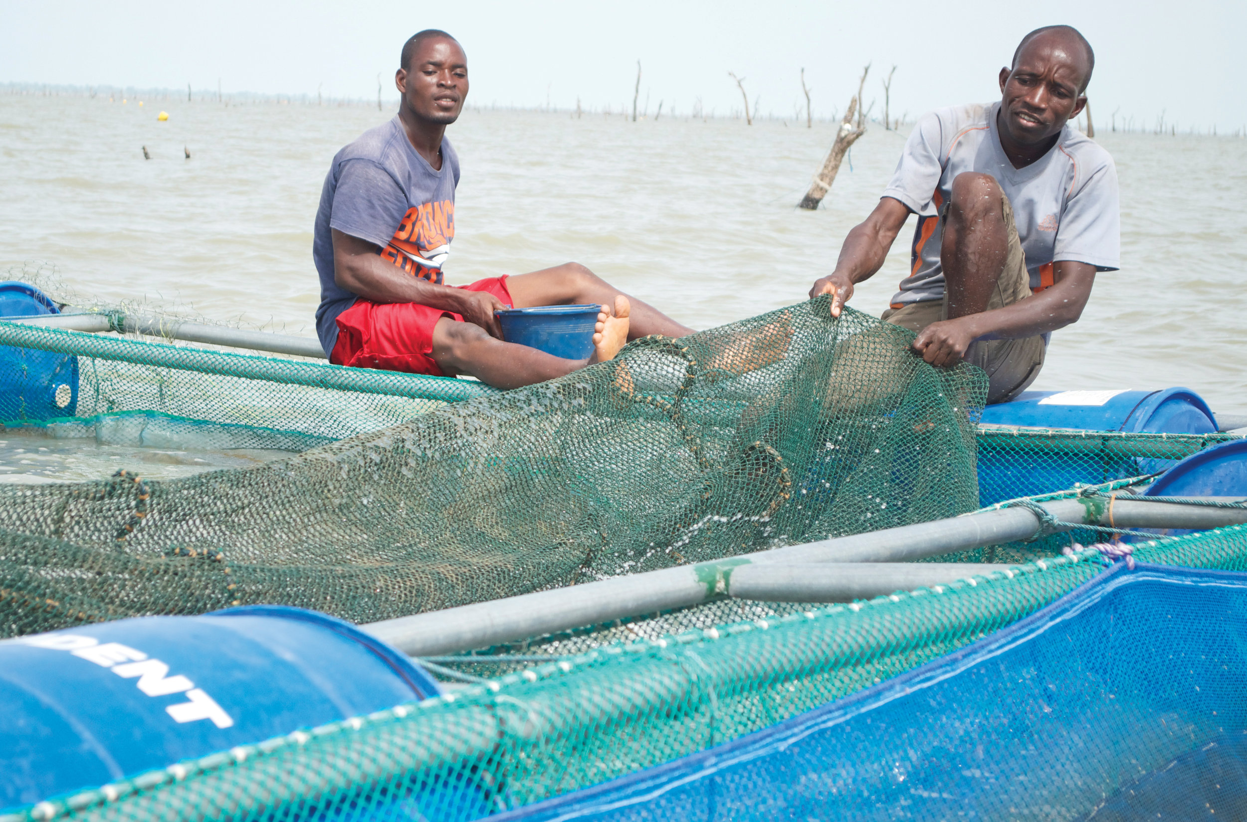 fishermen tending to the cages