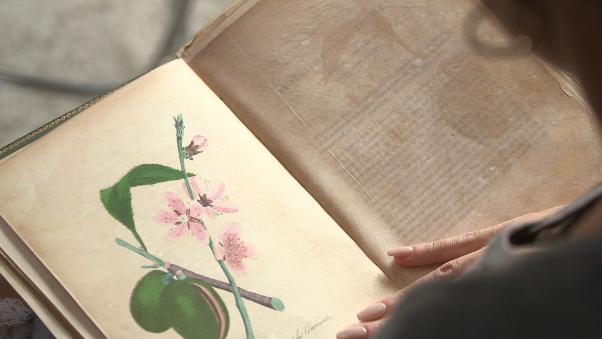 Floriagraphy Joanna Pascale reading an old book about flowers.jpg
