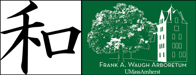 The  wa  logograph, depicted above, has a mystic resemblance to the champion Japanese elm standing beside old South College. At its core, UMass has maintained the balance of green and built environments.