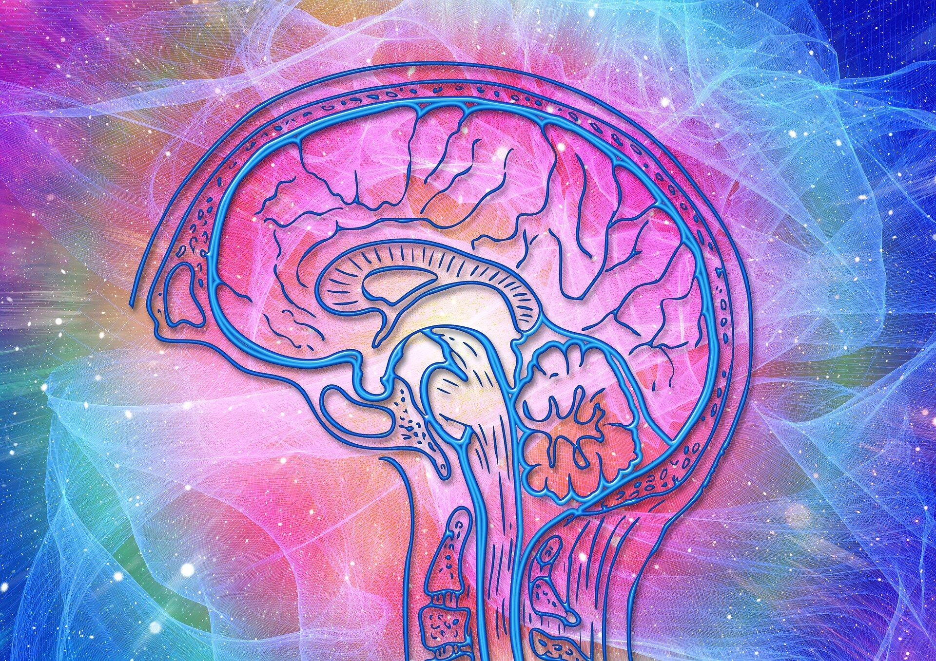 brain-4372153_1920.jpg