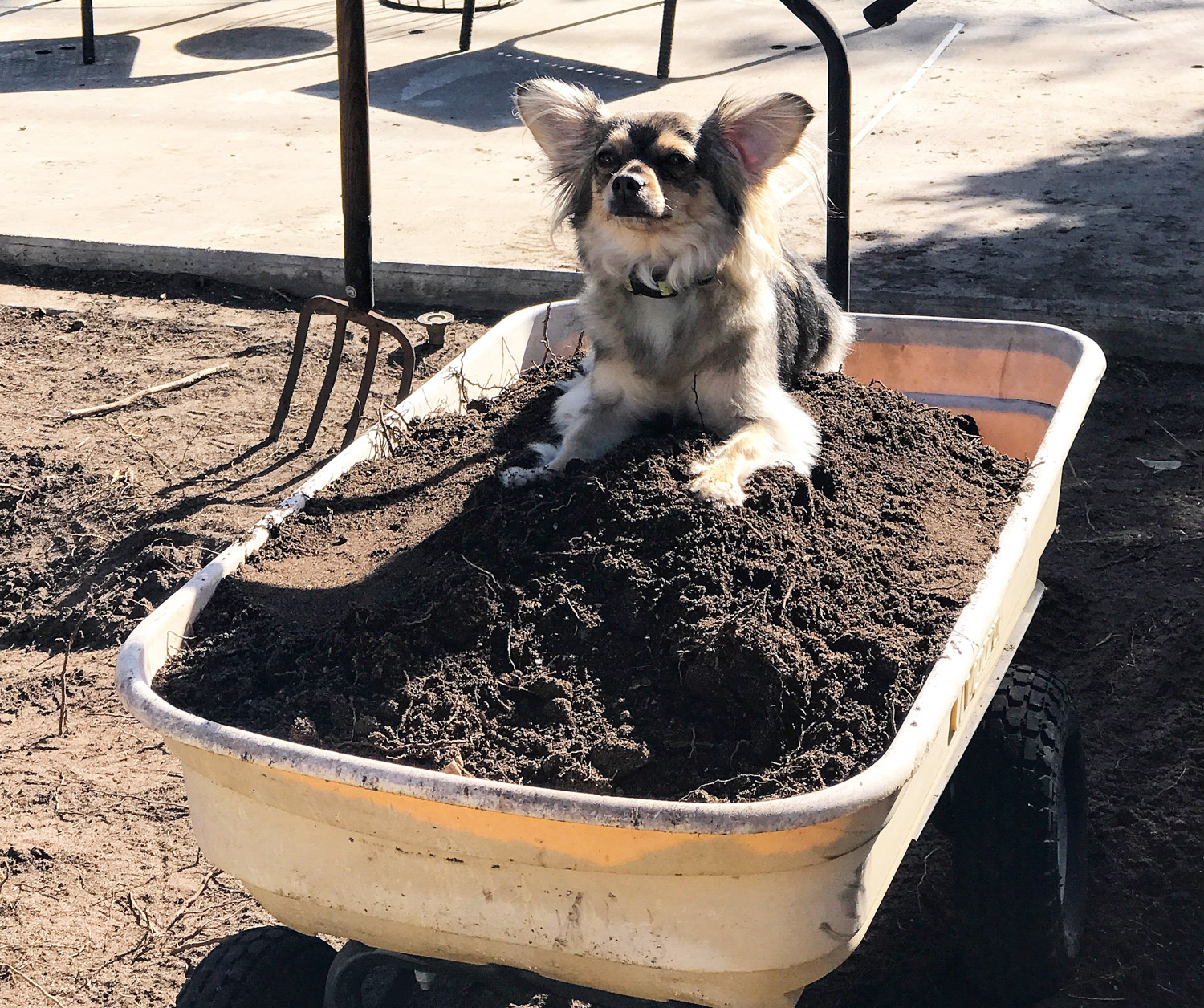 Dirt removal.