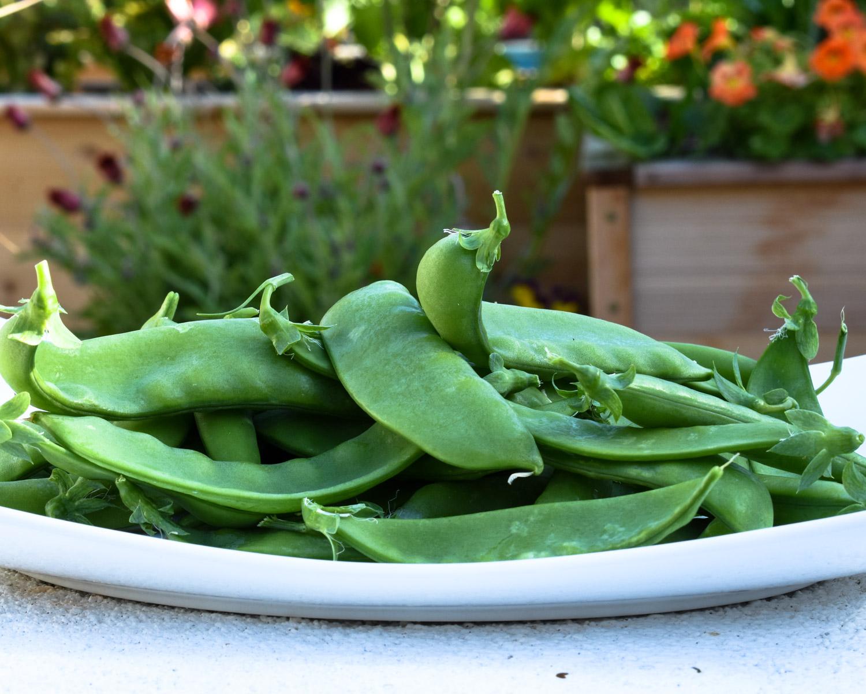 Giant Snow Peas