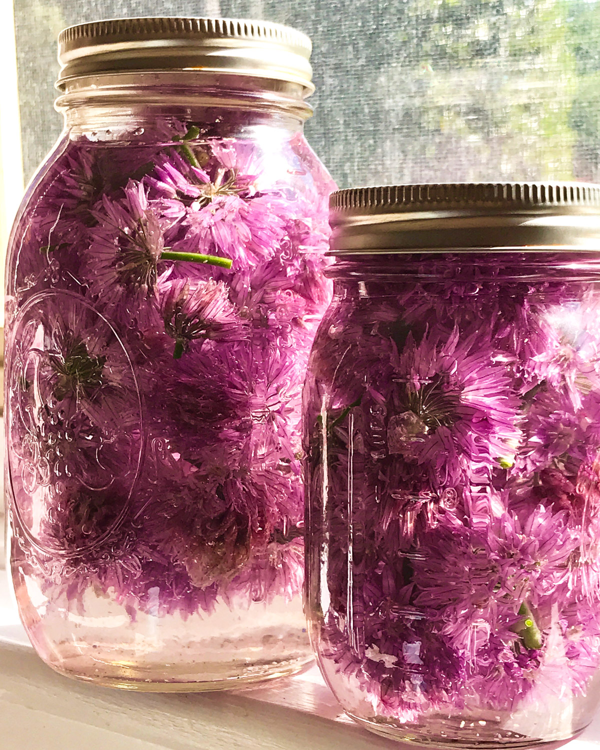Infusing white vinegar with fresh chive blossoms.