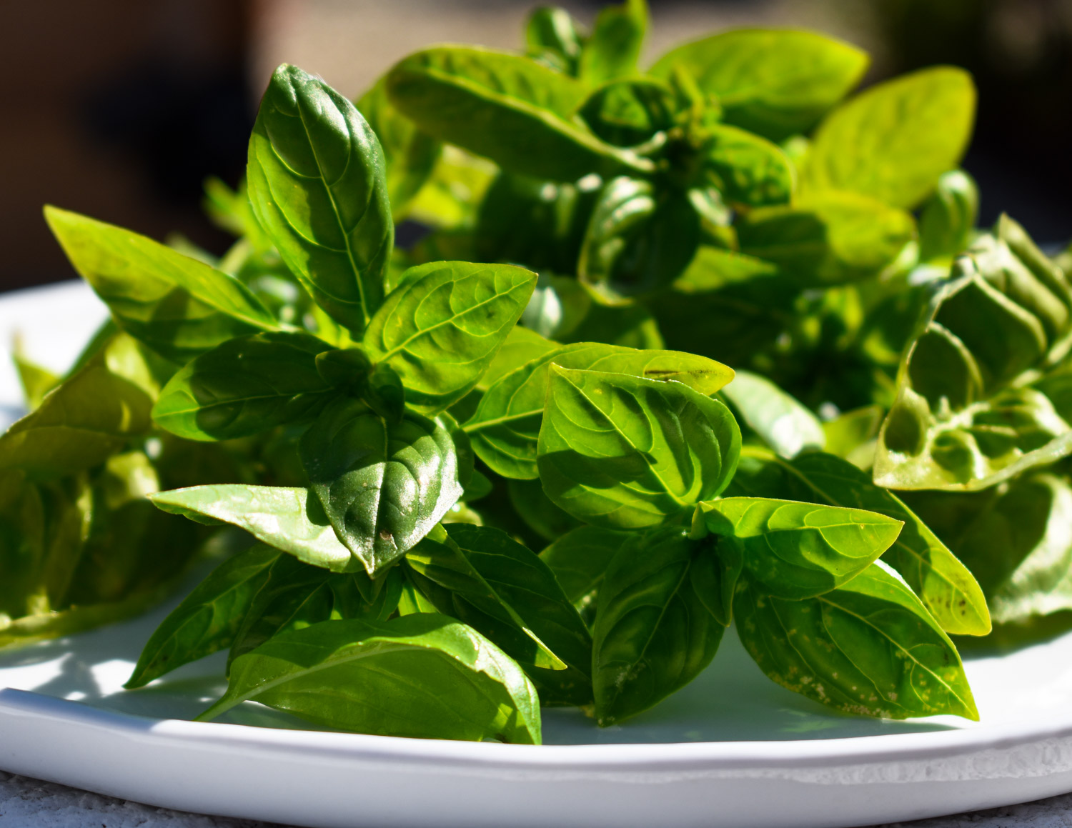 Fresh picked basil.