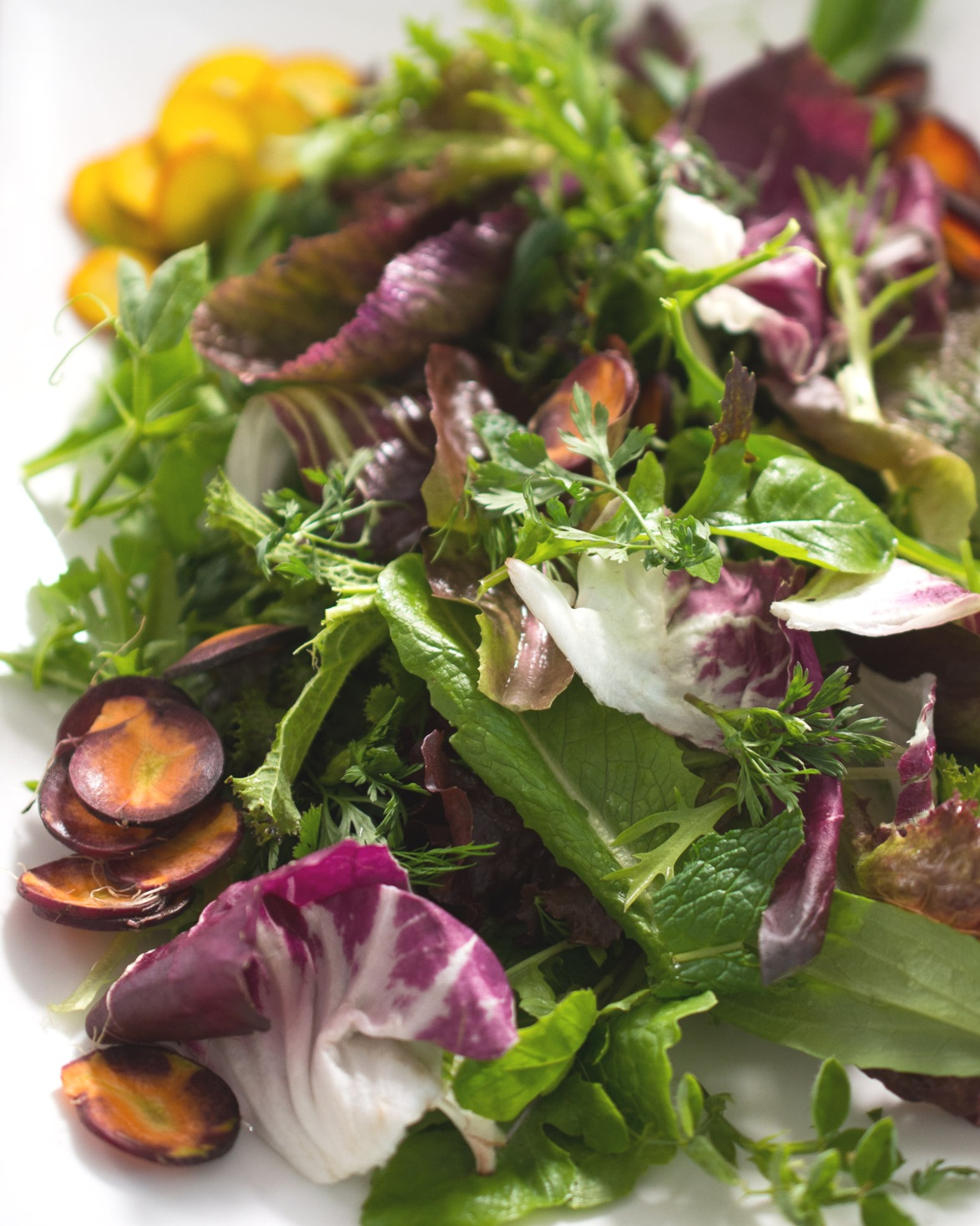 Early season greens with herbs and shaved golden beets.