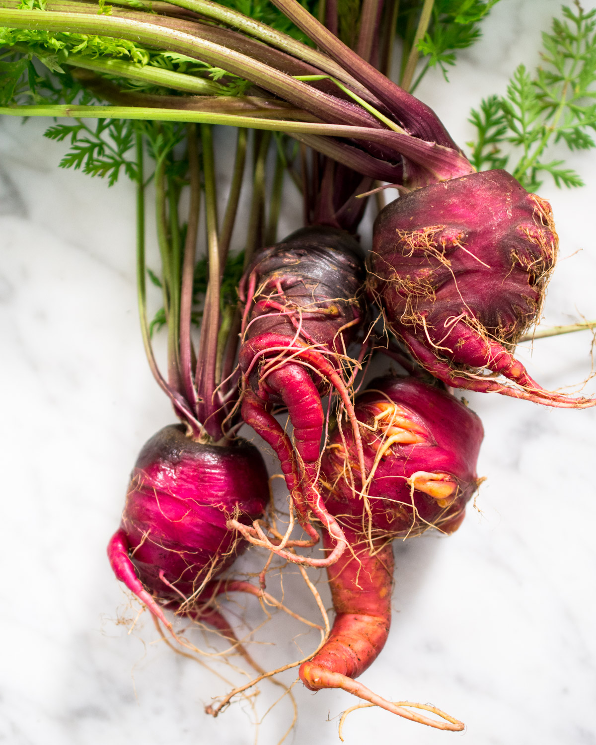 Ugly purple carrots just harvested from the garden.