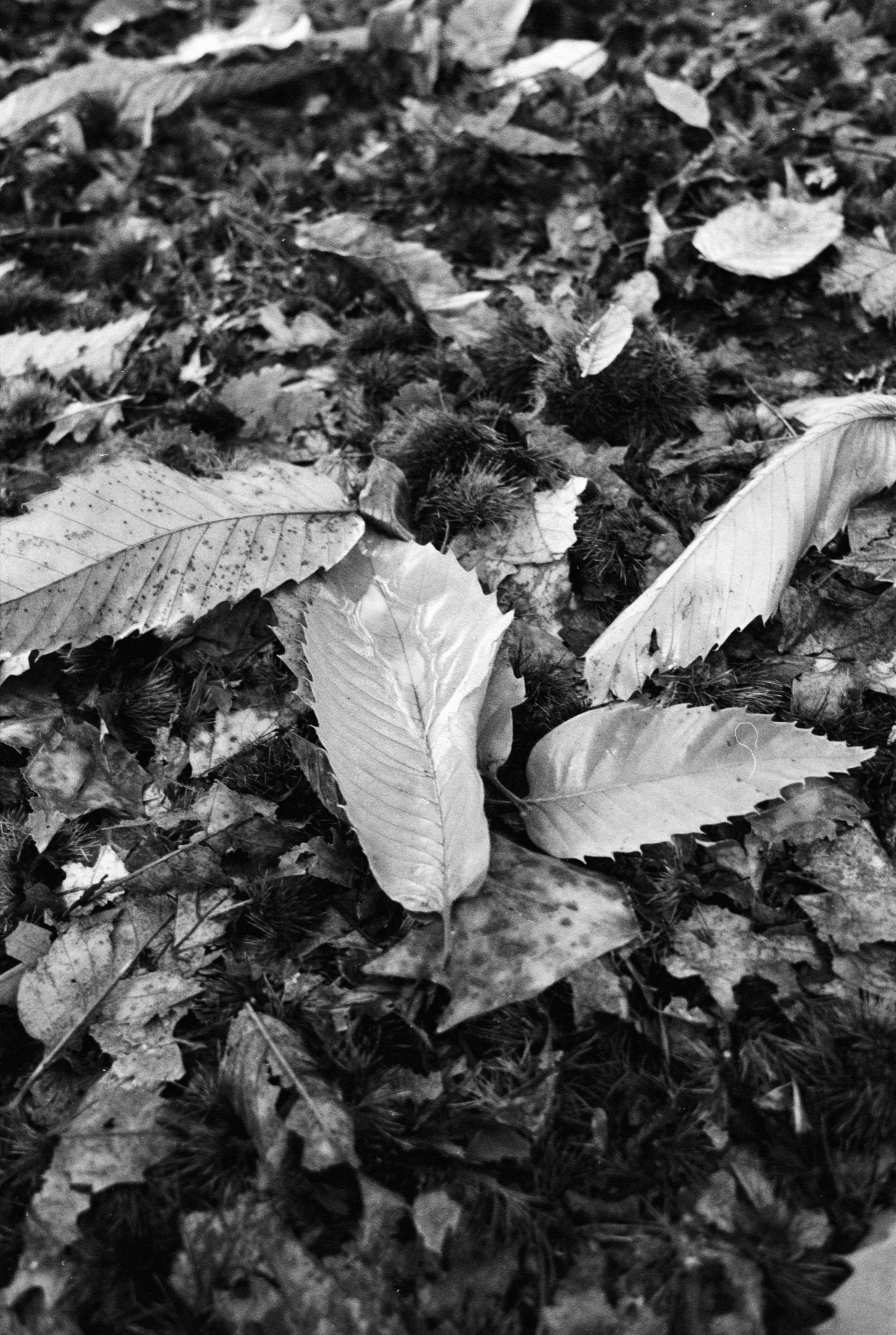 Nature 12.jpg